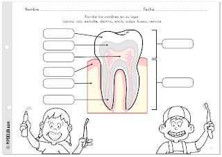 Salud Bucodental infantil. Actividad: partes de los dientes con Pipo by @evapipo