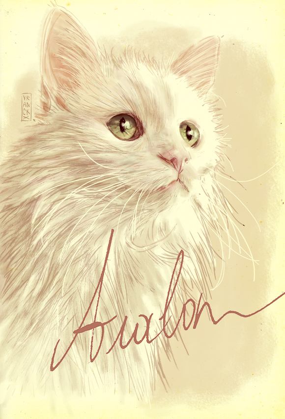 my cat Avalon