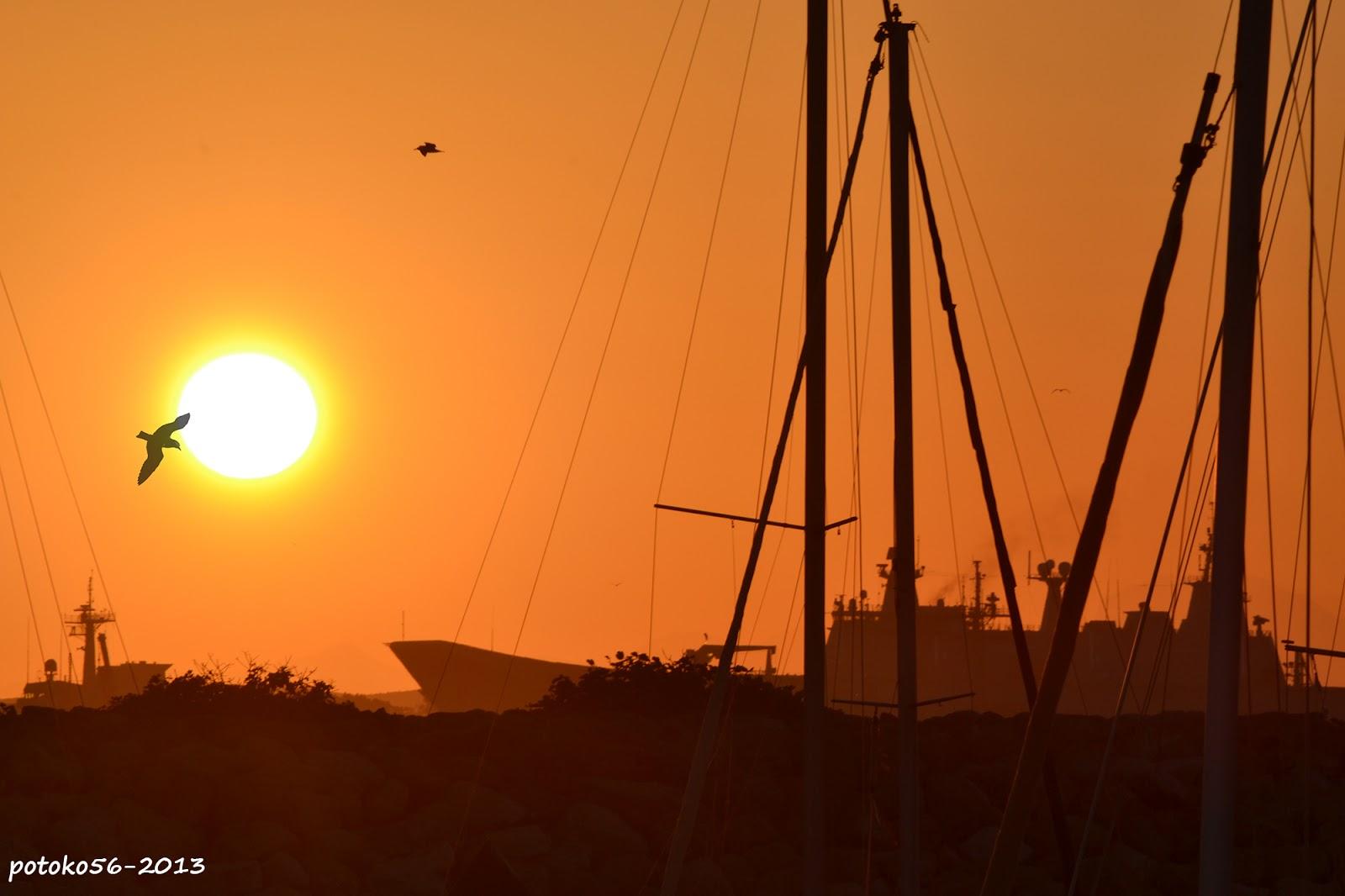 El sol saliendo y gaviotas entre mástiles