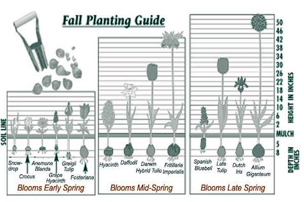 A Guide To Northeastern Gardening Fall Gardening Time To Plant