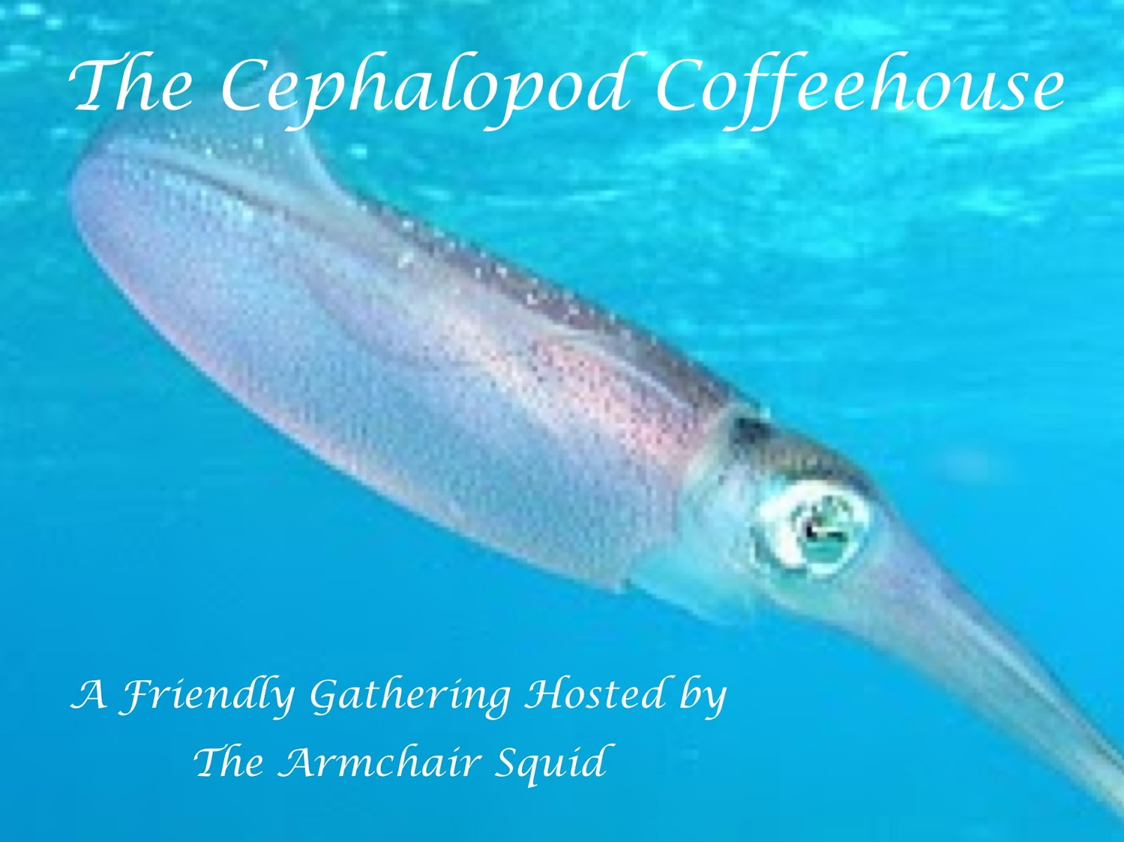 http://armchairsquid.blogspot.com/