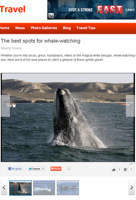 the best spots for whale watching