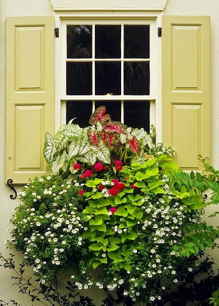 willow bee inspired garden design