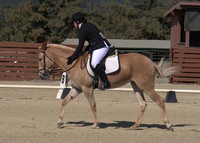 palomino dressage mule