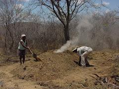 A produção de carvão vegetal na caatinga