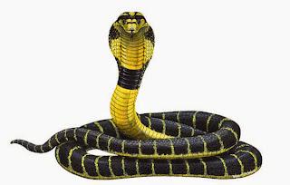gambar ular kobra   animasi korea meme lucu emo bergerak