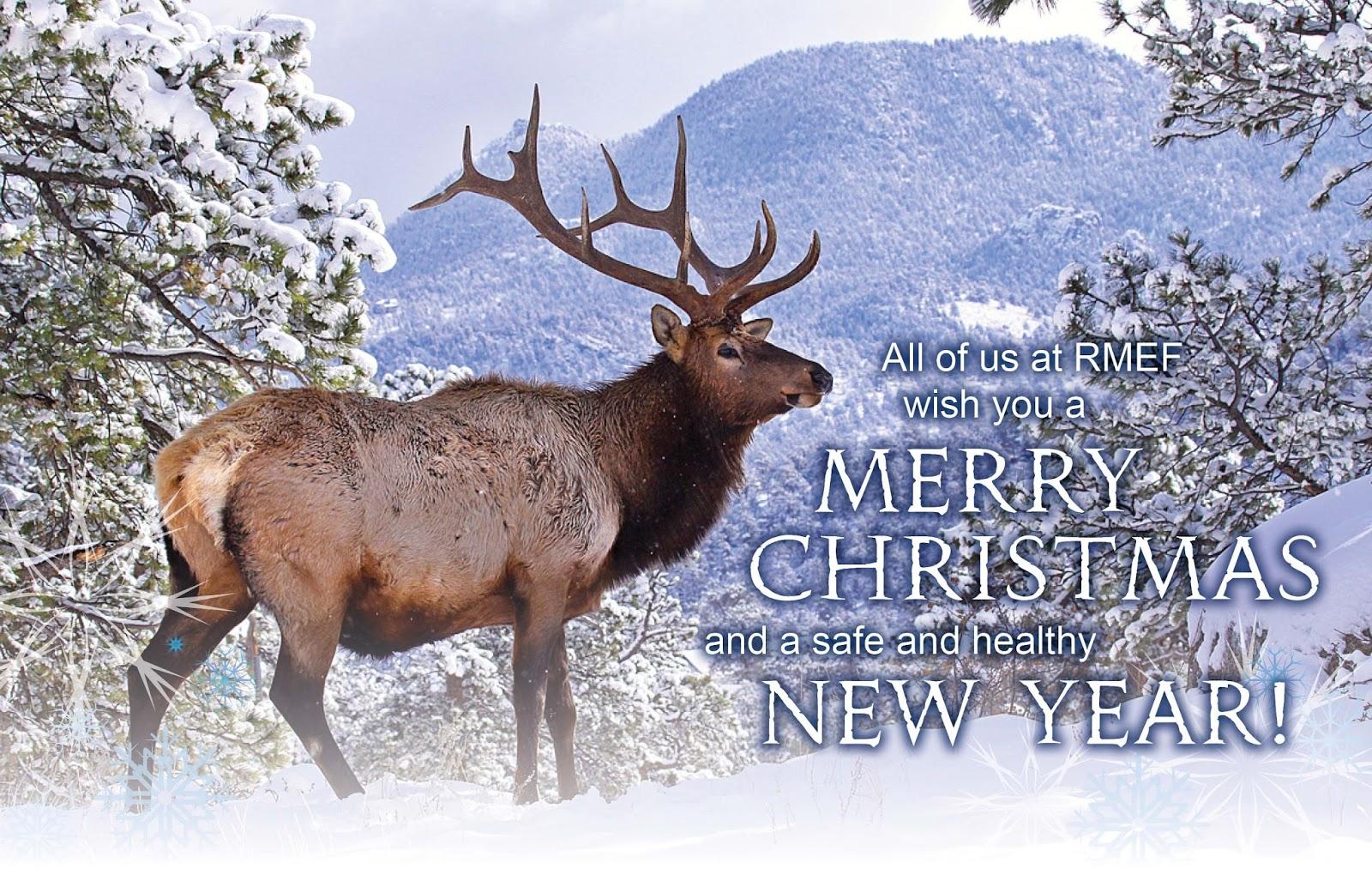 Wildlife Christmas Cards