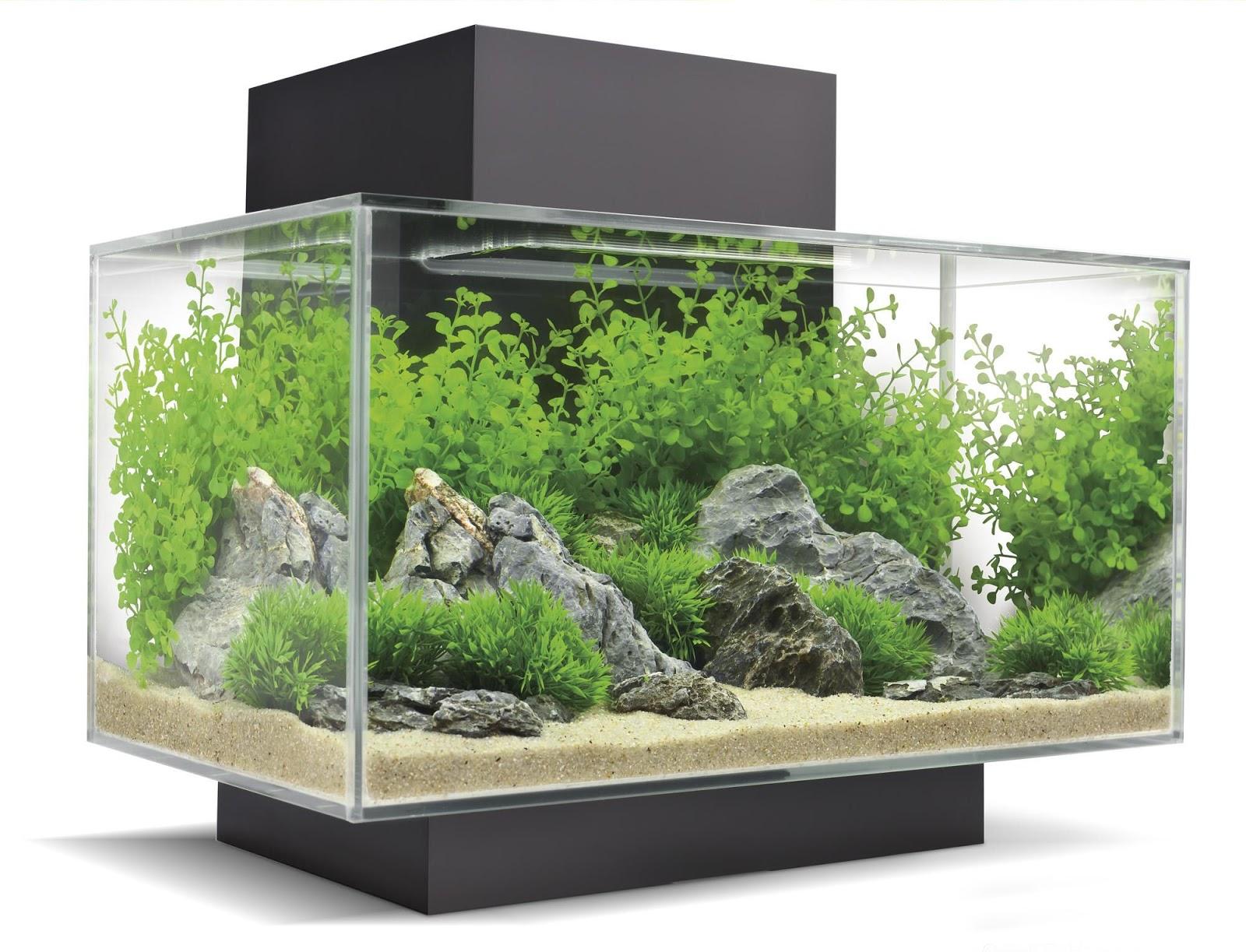 Roj fashion lifestyle the living lamp biorb flow for Aquarium edge