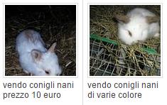 vendo conigli nani