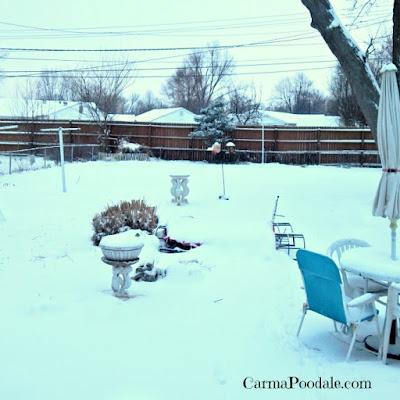 Owensboro Ky Jan 20 2016 snow