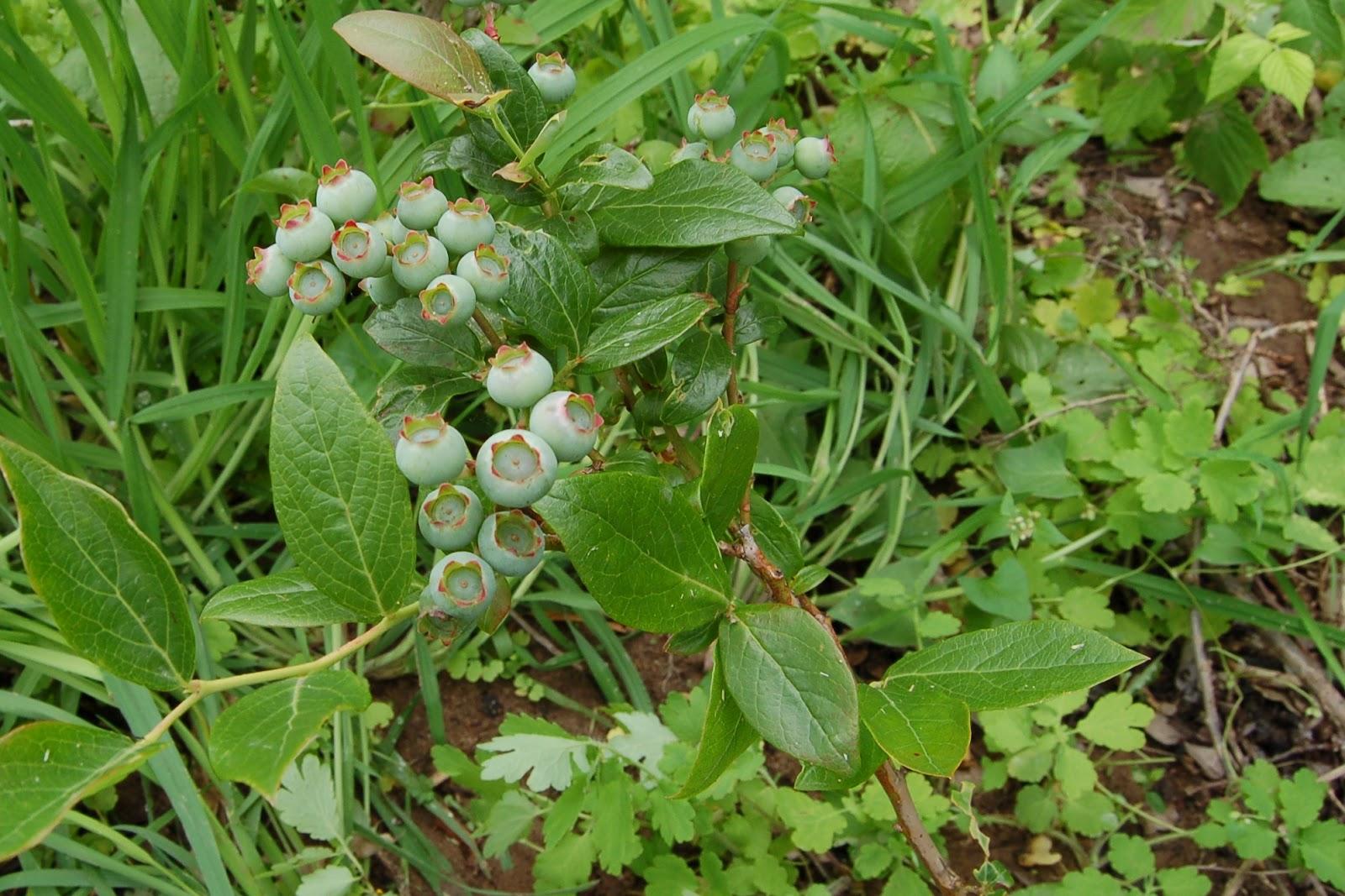 Megchels goed juni 2012 for Tuinontwerp eetbare tuin