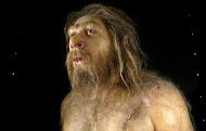 MUSEO DE LA EVOLUCIÓN HUMANA. BURGOS