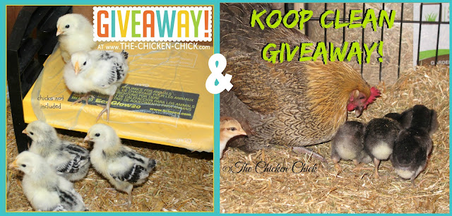 Enter to WIN a Brinsea EcoGlow 20 Chick Brooder WITH a ginormous bag of Koop Clean Bedding