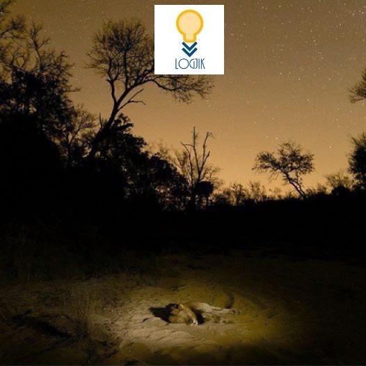 MREKULLITE E NATYRES: Mbreti Pushon Nen Driten e Henes (National Geographic Photo)