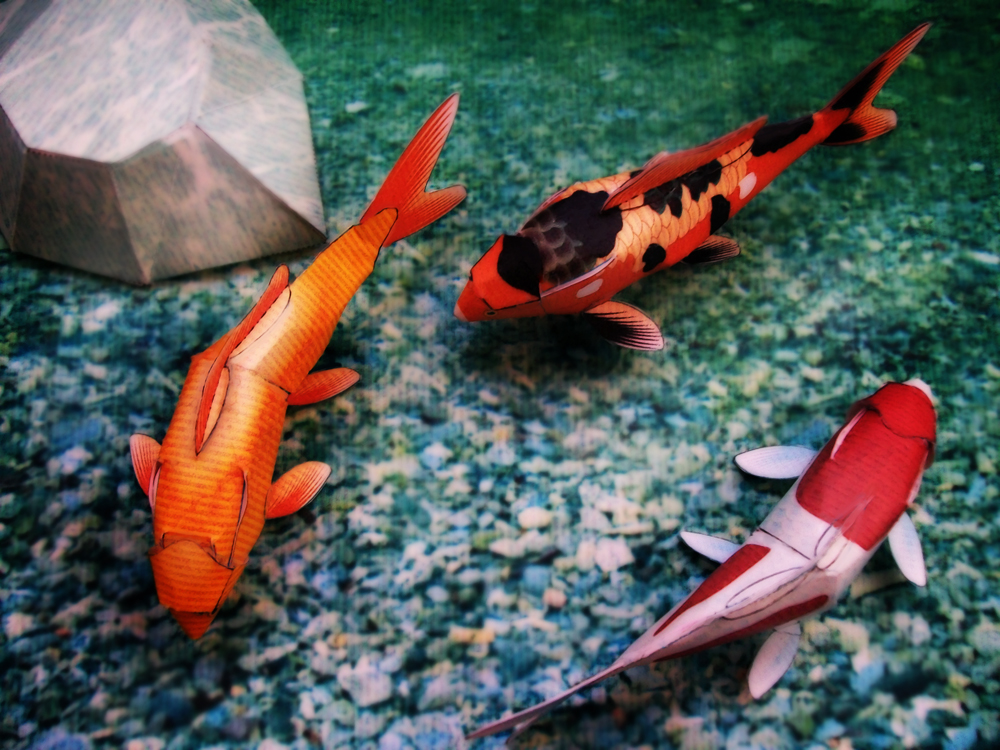 Koi fish fishes world hd images free photos for Tiny koi fish