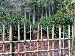 高山寺茶園
