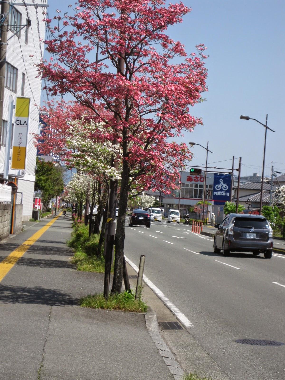 fukuoka japan mission april 2014