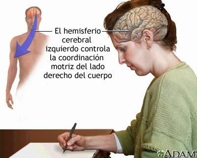 Lámina de mujer escribiendo con mano derecha.Se destaca hemisferio cerebral izquierdo.