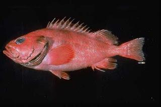 Ditemukan ikan tertua di dunia, berusia 200 tahun
