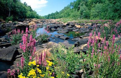 Río que data de la edad del hielo en Wisconsin, USA.