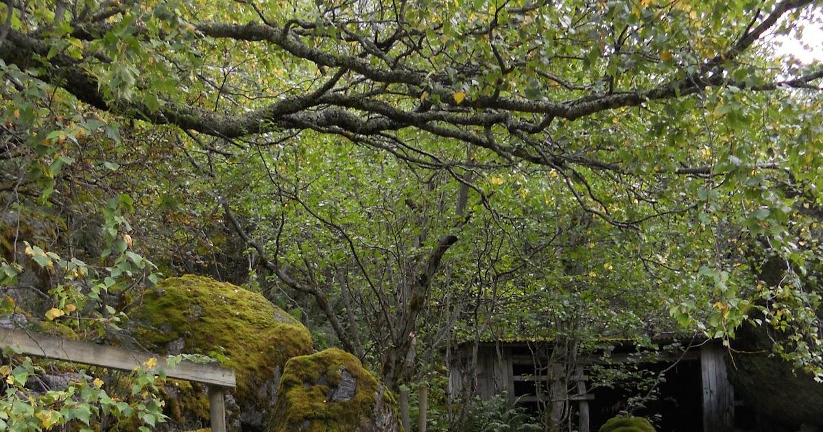 Jardineria eladio nonay ammi visnaga jardiner a eladio - Jardineria eladio nonay ...
