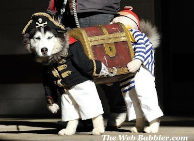 Halloween_pirate_dog_costume