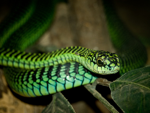 2404711901 2447ea96a3 Amazing Colorful Snakes   Most Beautiful Venomous Snakes of the World