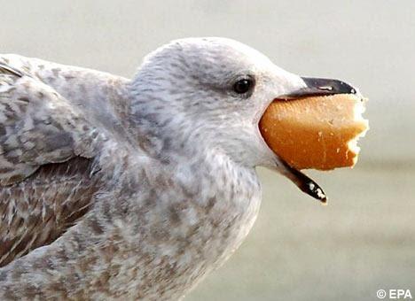 Can I Feed A Seagull Dog Food