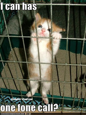 gambar ilustrasi kucing yang dipenjara