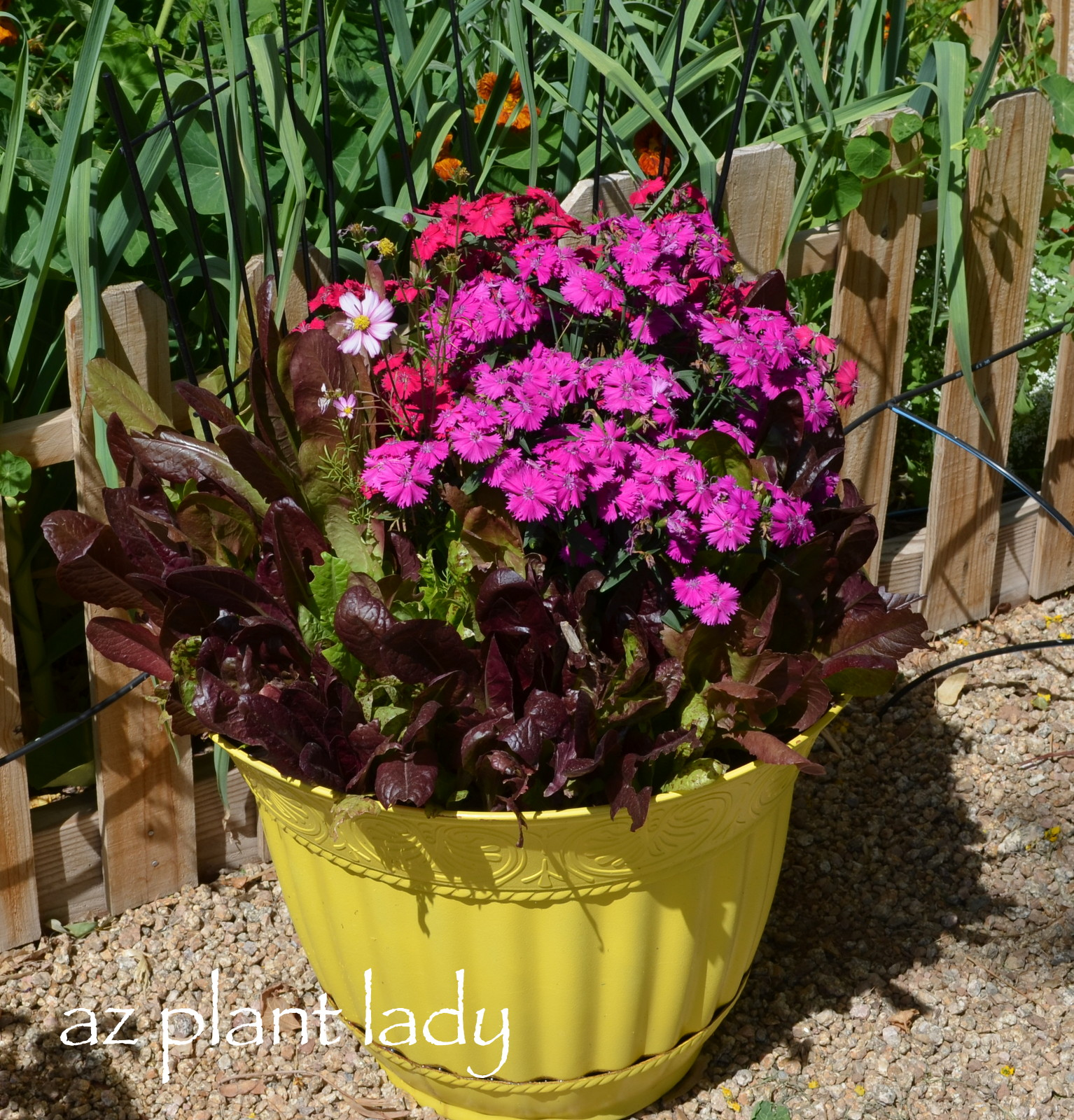 vegetable and flower containers ramblings from a desert garden