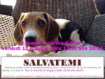 continua il PRESIDIO A VERONA PER SALVARE 32 BEAGLE DALLA VIVISEZIONE