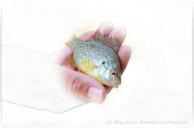 pêche en famille étang de Sauvebonne Hyères  Var