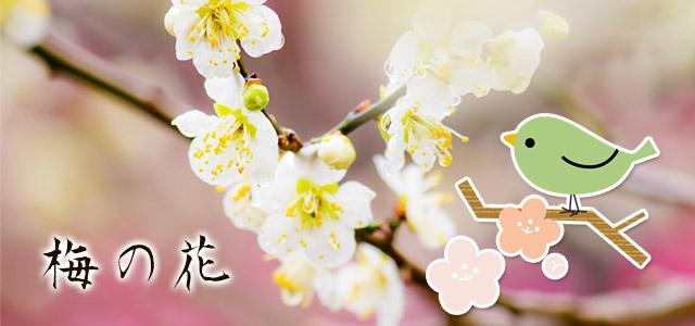 梅の花の写真やイラストの無料素材いろいろ。春らしいかわいいデザインに。商用可。