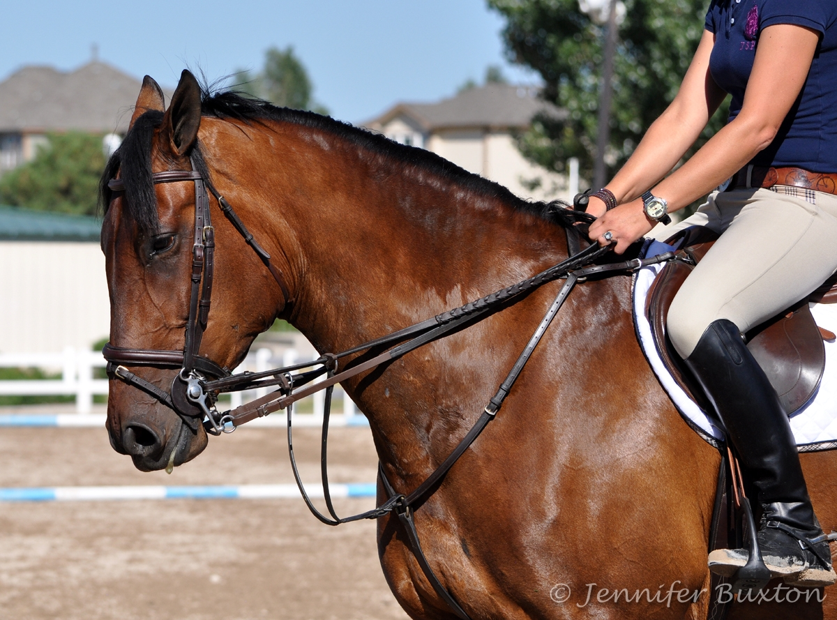 Braymere custom saddlery almost wordless wednesday for The pelham