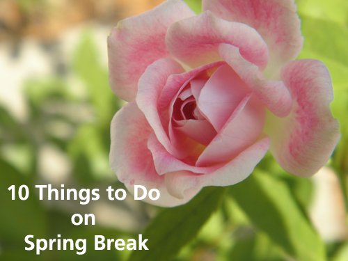 Ideas for things to do during a homeschool spring break.