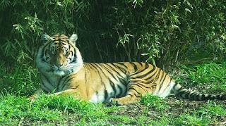 ملف كامل عن اجمل واروع الصور للحيوانات  المفترسة   حيوانات الغابة  33892351_5a2c3fe81a