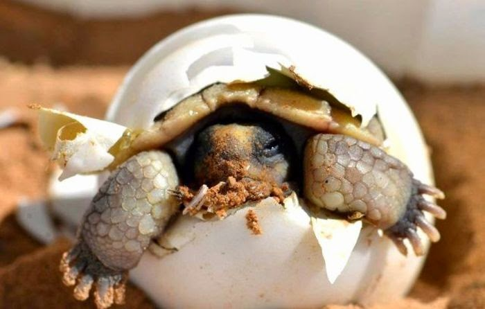 Funny animals of the week - 15 May 2015, best animal photos, funny pictures of animals