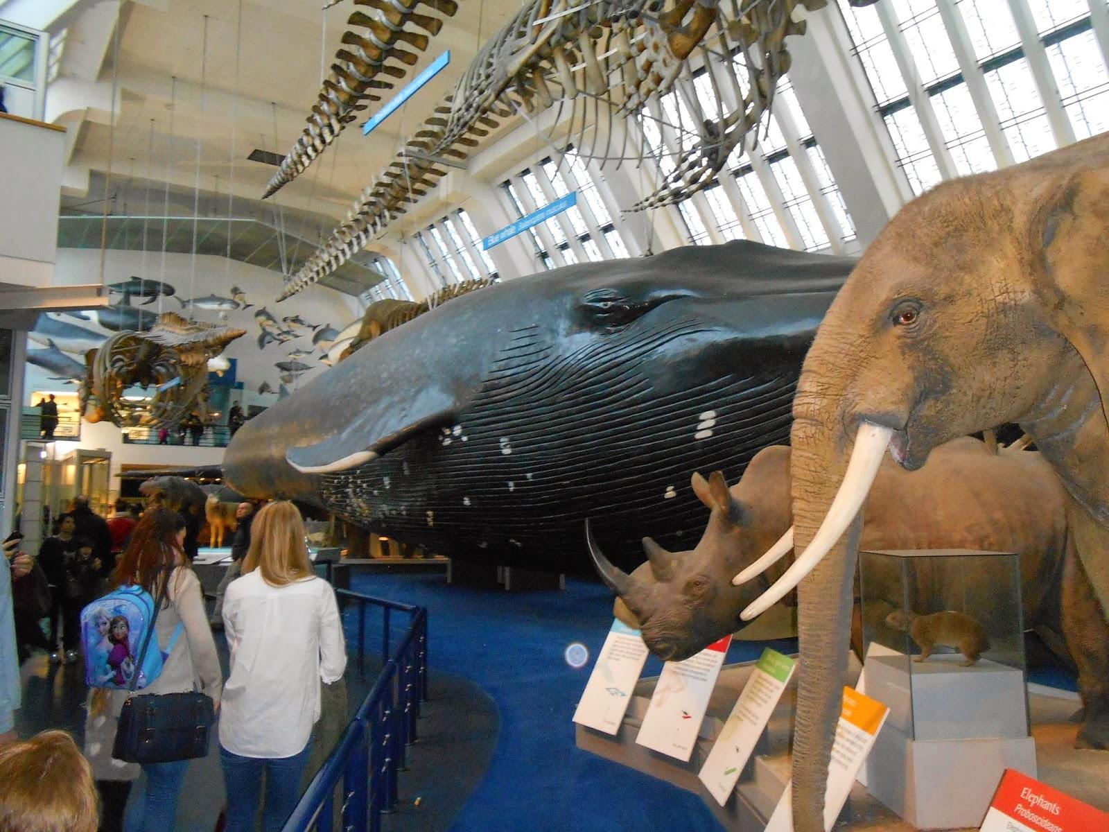 Modele zwierząt w Natural History Museum.