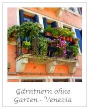 Gärntnern ohne Garten - Bella Venezia