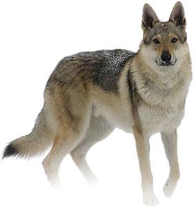 20-Nahual Tz'i - animal asociado Perro y Coyote