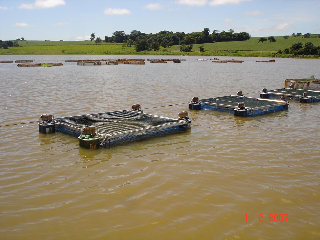 Cria peixe tilapicultura como criar peixes em tanques rede for Tanques para cria de tilapia