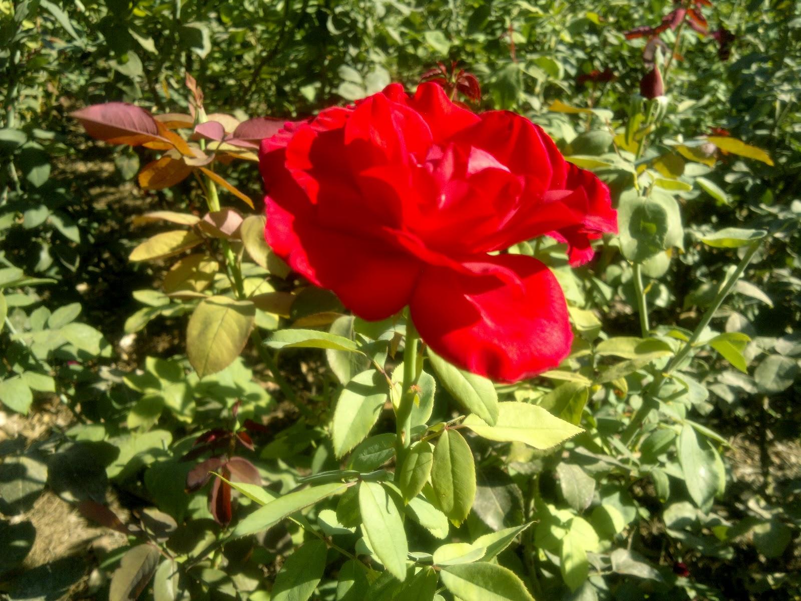 Crea tu jard n jard n de historias rom nticas monforte for Crea tu jardin
