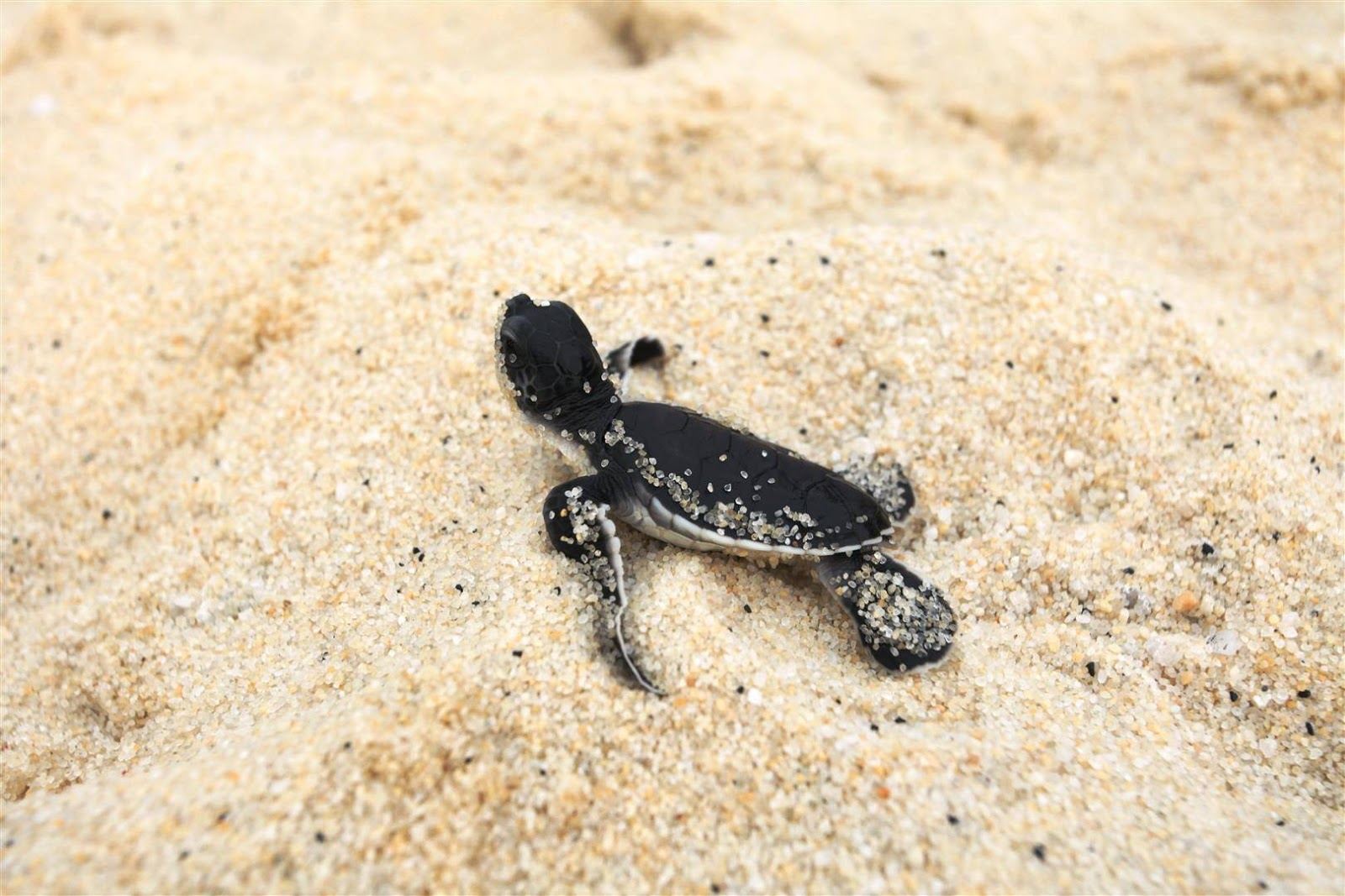 how to make a green sea turtle out of scraps