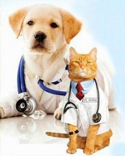 Вызов ветеринара на дом в Запорожье