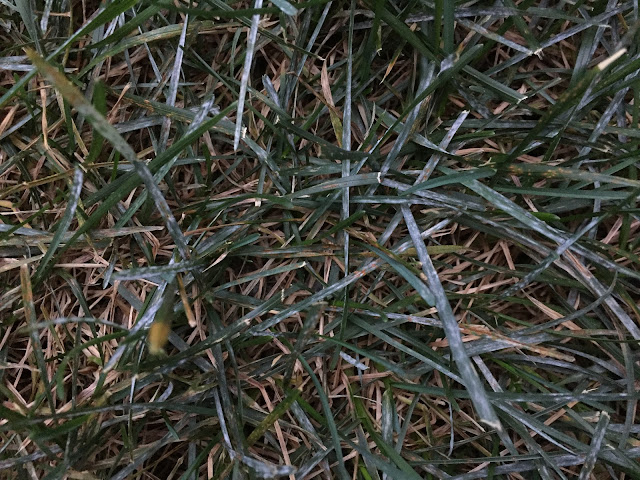 white powder spots on lawn