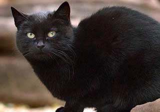 Tommasino, kucing asal Italia berwarna hitam itu menjadi hewan terkaya nomor tiga di dunia setelah diwariskan hampir 10 Juta Poundsterling atau Rp 141 miliar dari pemiliknya, Maria Assunta, yang meninggal bulan lalu