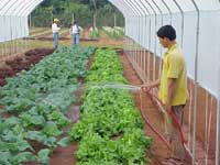 Riegos en cultivos riego por manguera - Mangueras de riego por goteo ...
