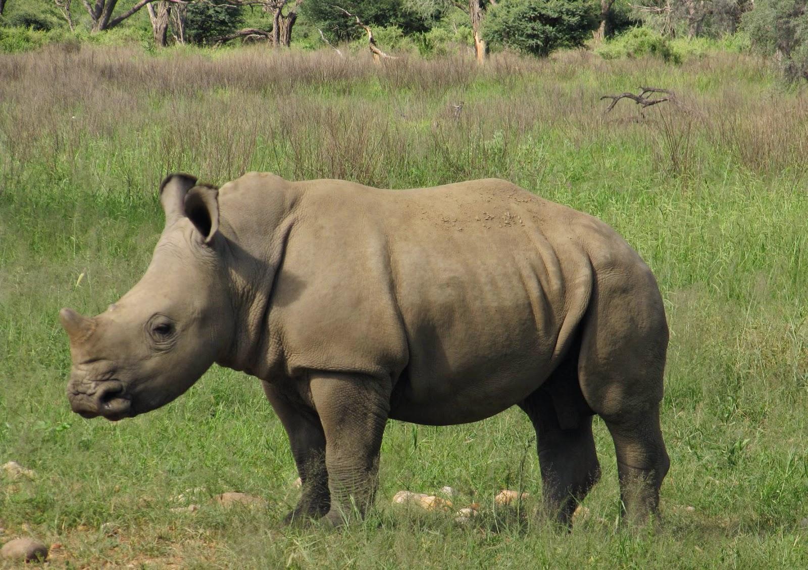 Rhinos & travel to Namibia - www.namibweb.com