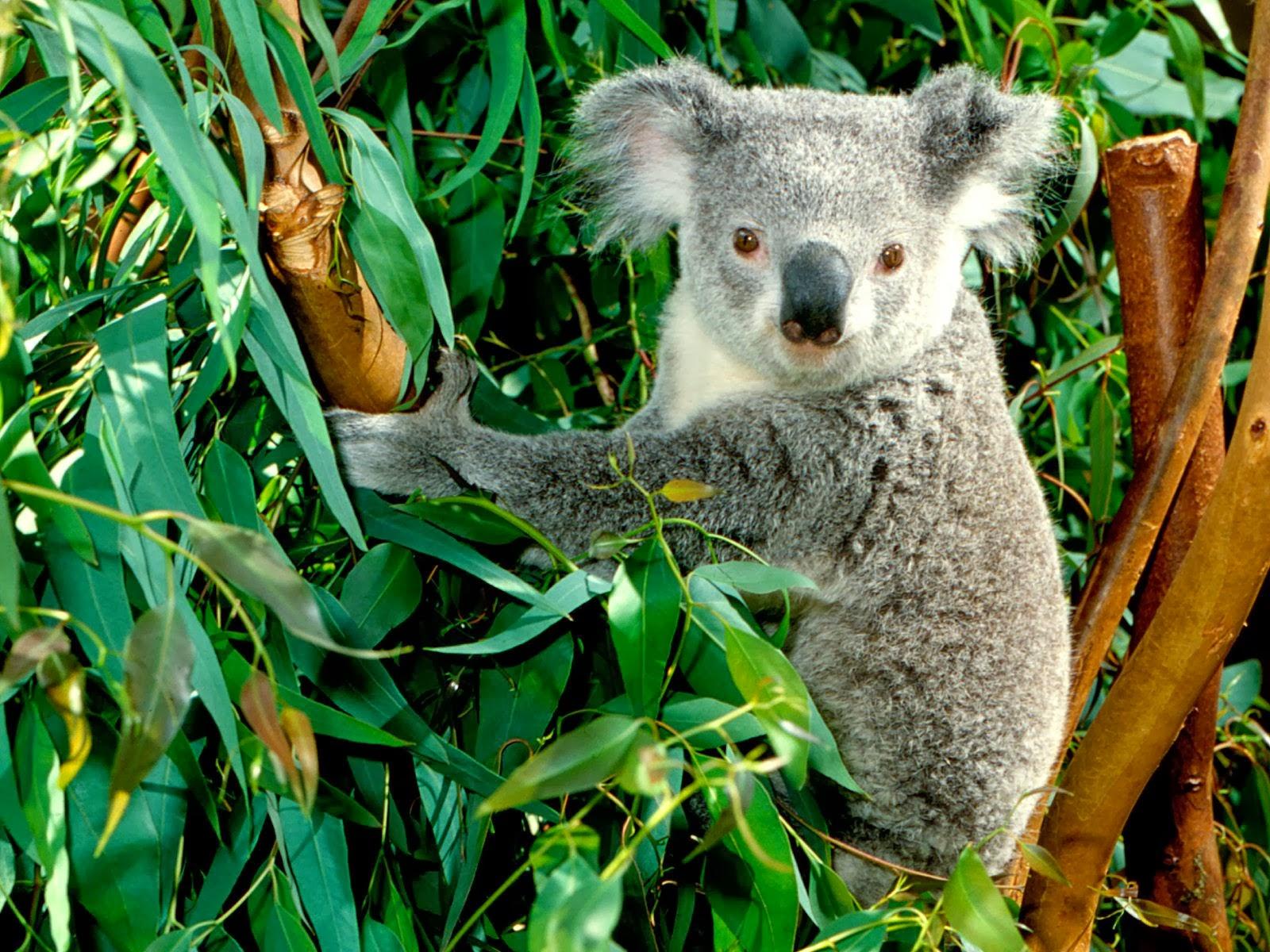 animales herbívoros imagenes - Herbívoros Imágenes gratis en Pixabay