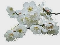The plum symbolizes courage because even when snow covers the land it never fails to deliver flowers.